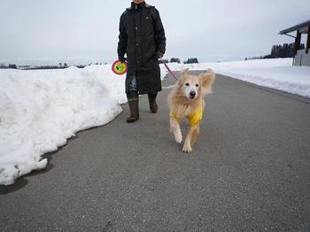 お散歩141.JPG