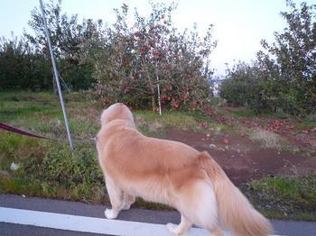 散歩072.JPG