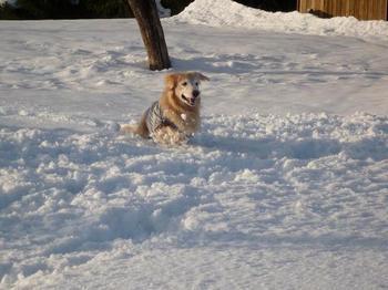 雪遊び074.JPG