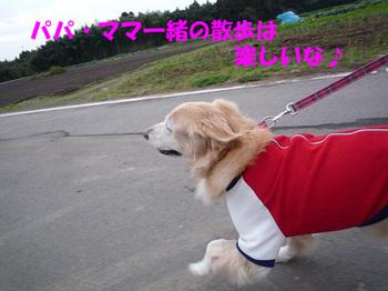 散歩132.jpg