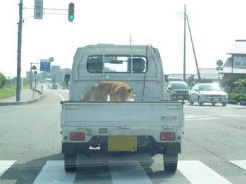 犬発見221.JPG